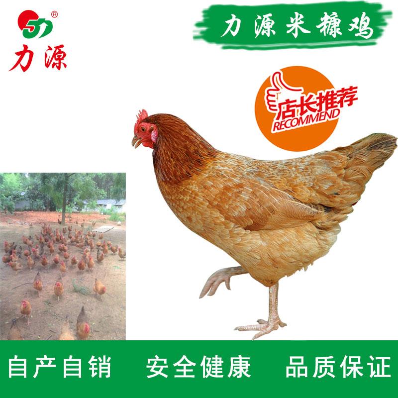 贝博游戏 米糠鸡
